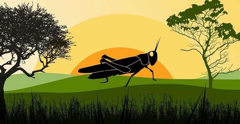 Locust - Credit: British Broadcasting Corporation