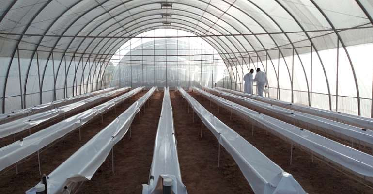 Hydroponic System Of Greenhouse Farm Opens In Sunyani