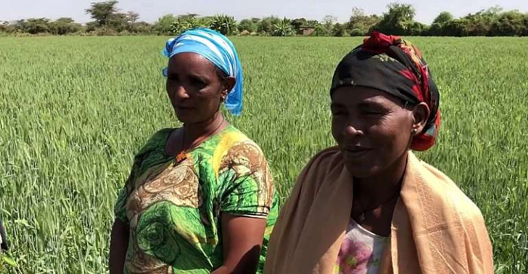 TAAT opens a new frontier for Wheat in Ethiopia