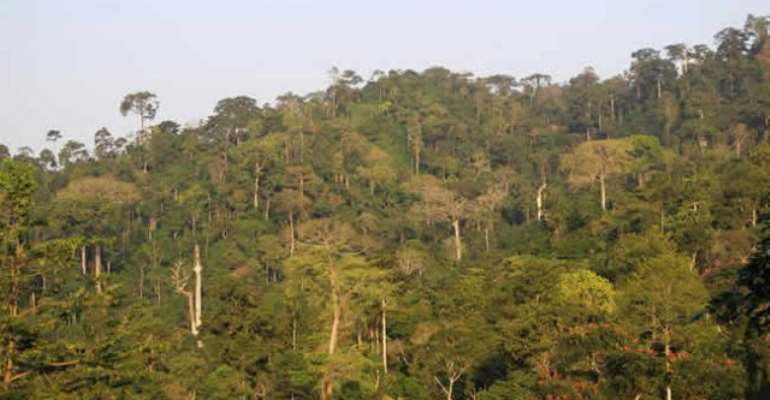 The Atewa Forest is a globally important ecosystem that harbours extraordinary wildlife and provides water for five million people.