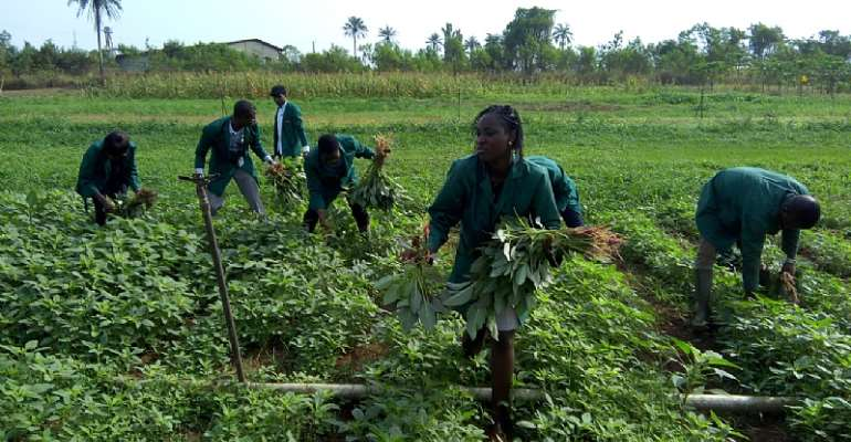 Youth Involvement Crucial To Successful Agriculture Intervention Programmes