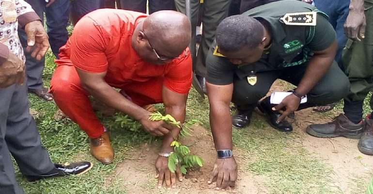 GES, Forestry Services Division Plant Trees
