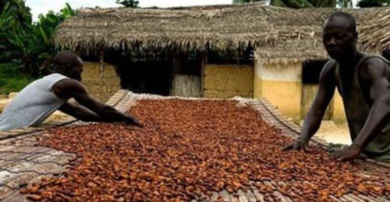 World Bank report cites corruption for low cocoa production in Ghana