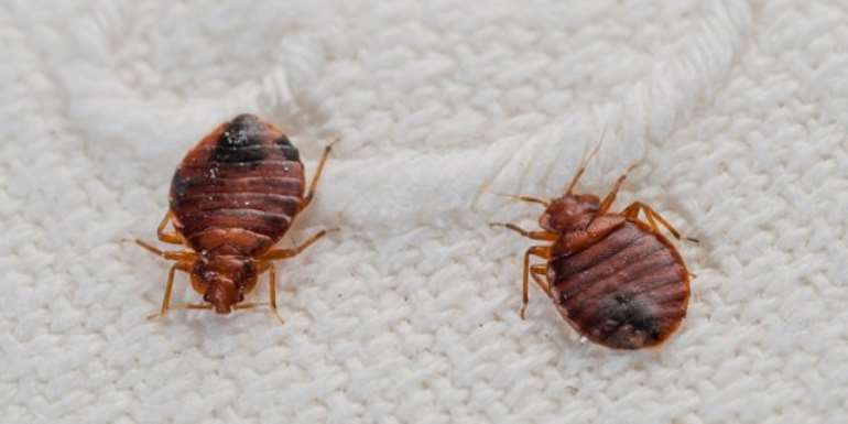 Tema Technical School Boarding House Shut Down Due To Bed Bug Invasion