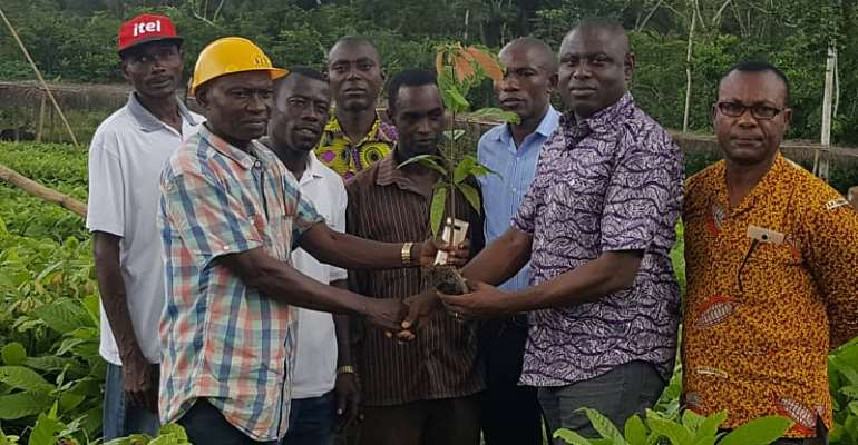 Tarkwa-Nsuaem farmers benefit from cocoa seedlings under PERD