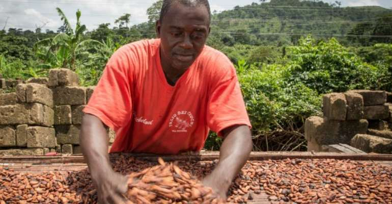 A Ghanaian Cocoa Farmer Spreads His Cocoa Beans For Drying