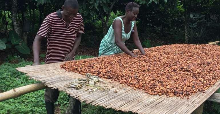 Ghana, Cote d'Ivoire Lift Ban On Cocoa Sales