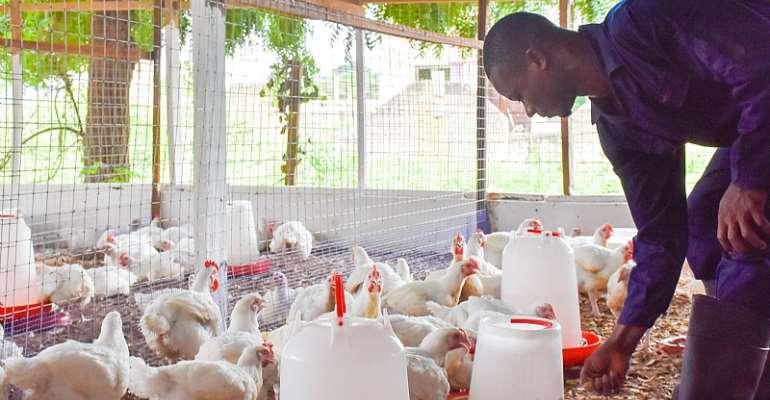 Poultry farmers await compensation over Bird Flu outbreak