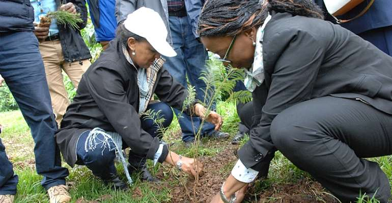Greening Ethiopia Initiative Plants 200 Million Saplings On A Single Day
