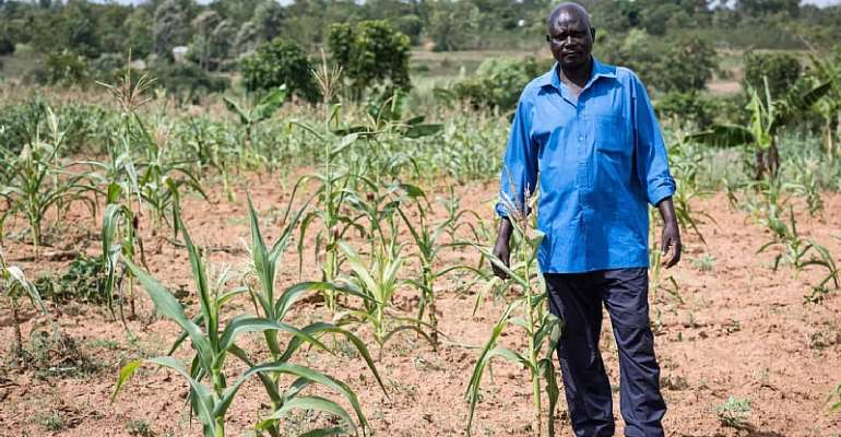 Farmers Demand Commercialization Of GMOs To Shore Up Productivity As COVID – 19 Negatively Impacts Yield On Farms