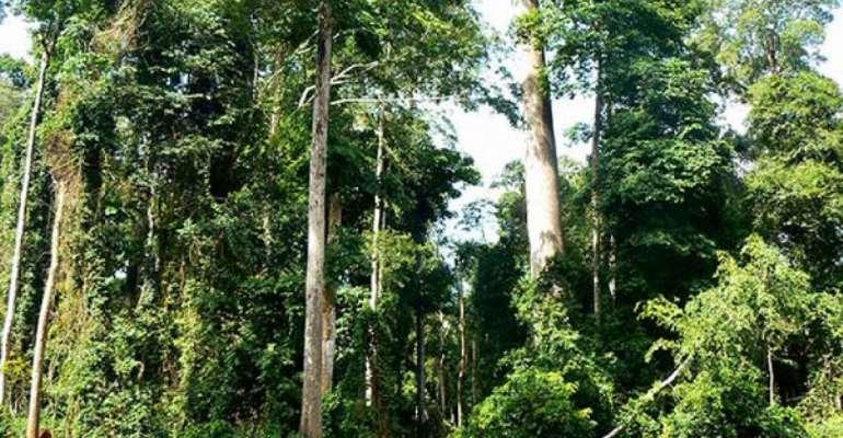 CSOs, Individuals Sue Gov't Over Exploration At Atewa Forest