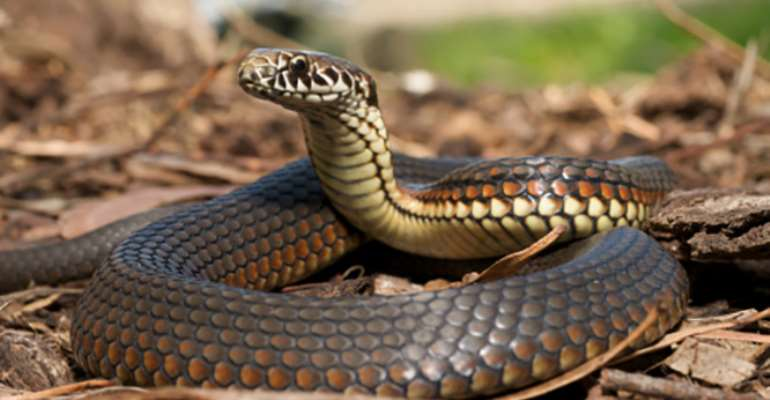 Embittered heart of a person becomes poisonous like a venomous snake
