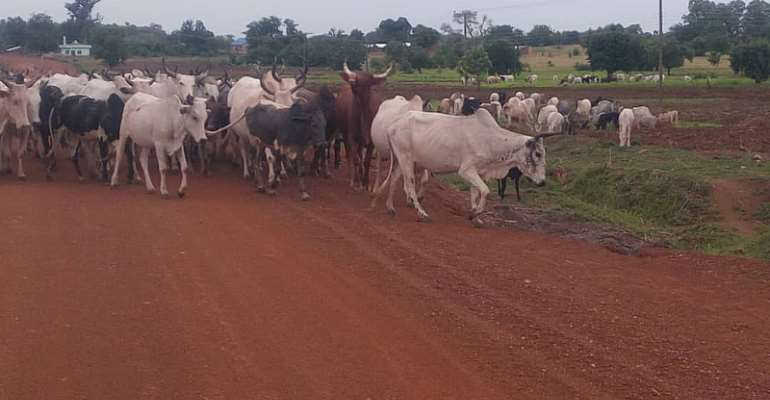 Addressing The Cattle Colony Controversy In Nigeria