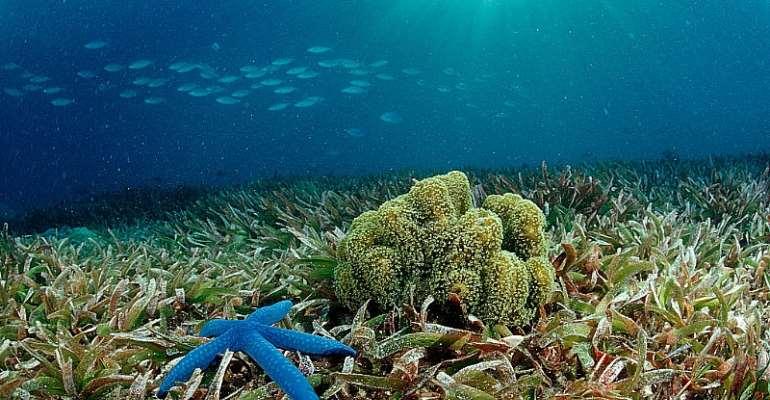 Seagrasses support a wide variety of life - Source: Reinhard Dirscherl/ullstein bild via Getty Image