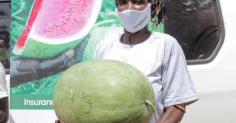 High Yielding Watermelon Seed Introduced To Farmers