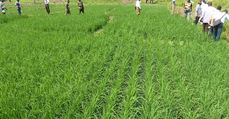Urban farmers in Ghana need to take greater interest in the health of consumers - Source: Wikimedia Commons