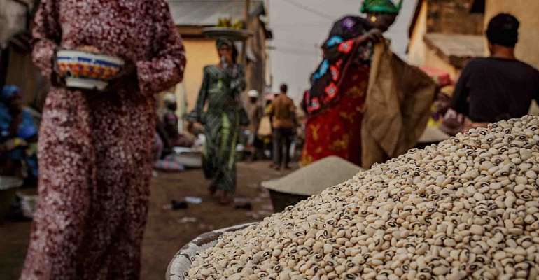 In Ghana, a Bumper Crop of Opinions on Genetically Modified Cowpea