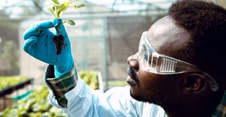 Innovation in food systems and agricultural research is critical for African countries. - Source: krumanop/Shutterstock