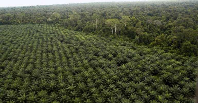 Red Flag Raised Over Forest Plantation Development Fund