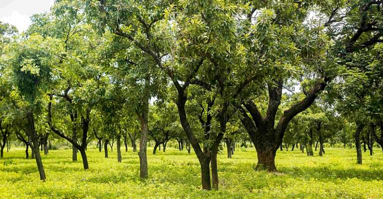 Ghana Gets $54.5m Project From Green Climate Fund To Reduce Deforestation, Carbon Emissions In Shea Landscape