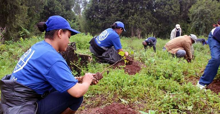 IOM staff planting trees at the Gullele Botanical Garden in Addis Ababa. Photo: IOM Ethiopia