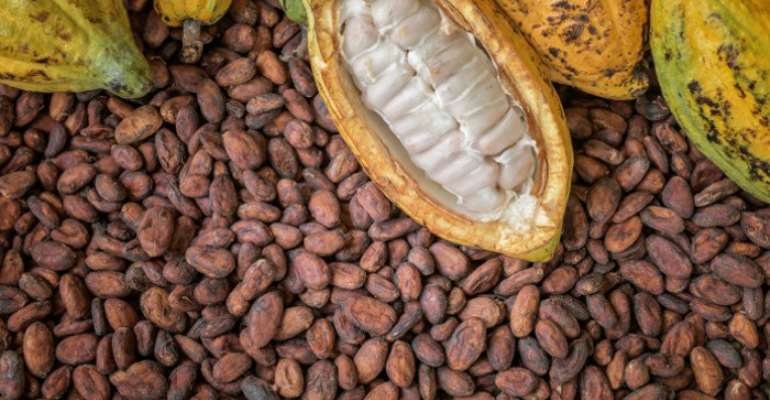 Gov't Looks For $1.5b To Buy Cocoa Beans