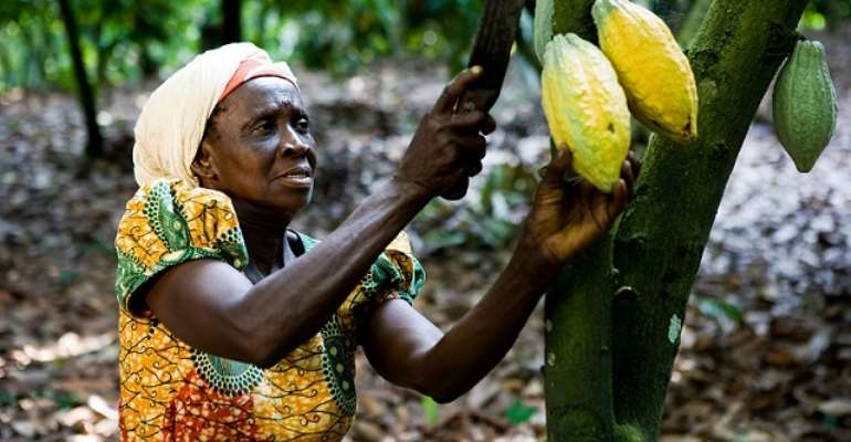Ghana makes millions in Cocoa, yet many farmers are poor - photo credit: Ghana media.