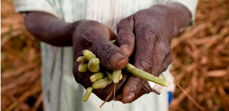 How Can Africa's Covid-19 Food Insecurity Challenge Be Tackled?