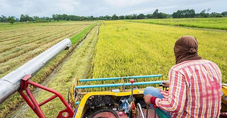 A rice farm in Nigeria - Source: Shutterstock