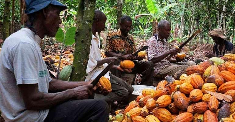 Kuapa Kokoo Has Never Cheated Cocoa Farmers – Management Debunks Media Reports