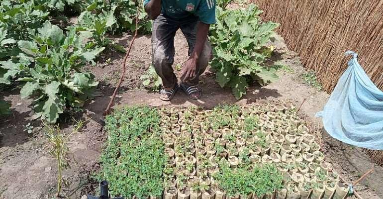 Senegalese Community Seizes its Future through TREES