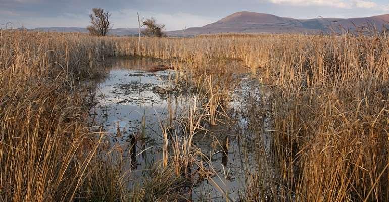A birding hotspot: the wetland reserve in Wakkerstroom, Mpumalanga.  - Source: GettyImages