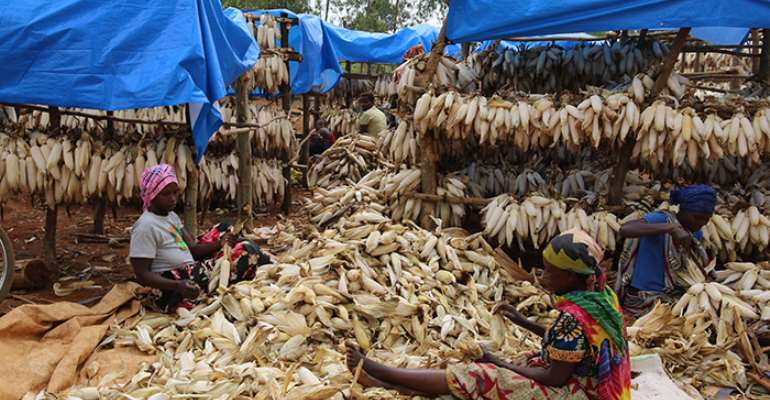 Africa cannot afford post-harvest losses; need policies and technologies to strengthen food security