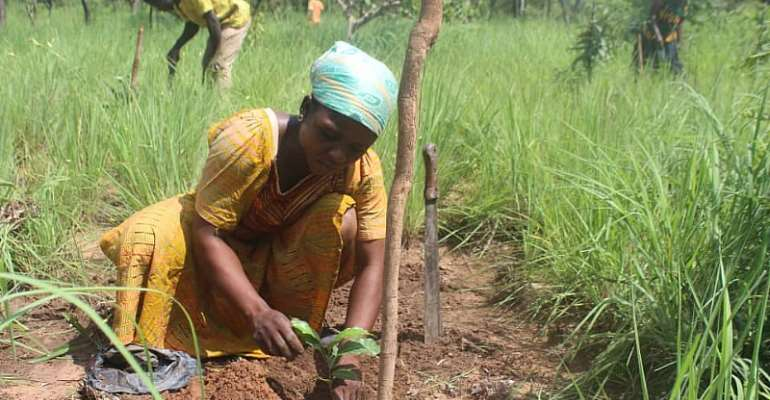 S/R- 3 Communities Plant 2,100 Trees To Restore Degraded Woodlands