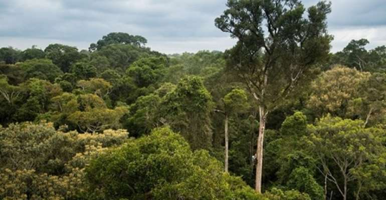 Ghana Runs To Chinese Gov't To Help Stop Afforestation