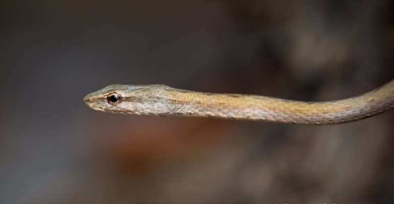 Woman dies from snake bite while attending to nature's call