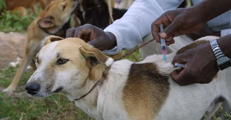 Vaccinating domestic dogs is a successful and cost-effective way to prevent rabies in dogs.  - Source: Sarah Cleaveland