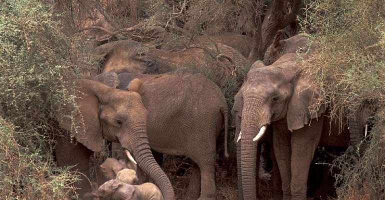 A herd of elephants in Mali. - Source: Carlton Ward Jr