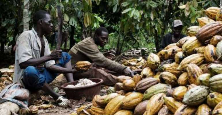 New cocoa season begins on September 30