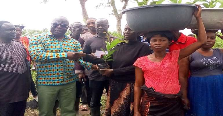 AAMA Hands Over Cashew Seedlings To Department Of Agriculture