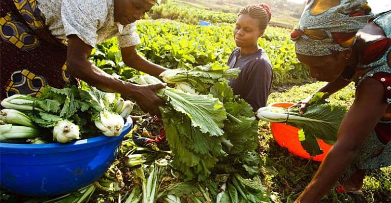 Experts Call For New 'alliance For Digitalisation' To Help Revolutionise African Agriculture