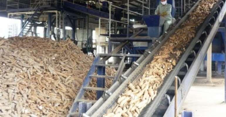 Cassava Processing Factory For Keta Begins