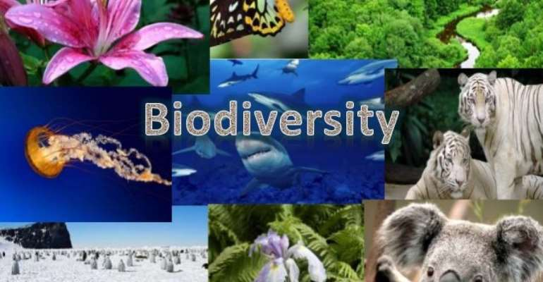 Protecting biodiversity is crucial to fighting hunger - IFAD calls for increased investments ahead of World Conservation Congress