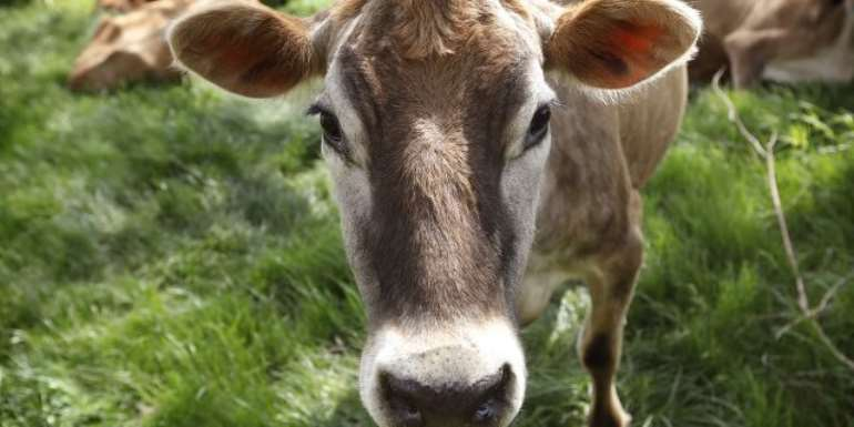 Animal Tuberculosis (tb) -A Looming Threat To Public Health