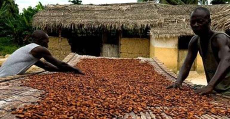 Minority questions 'propagandist' increment in cocoa price