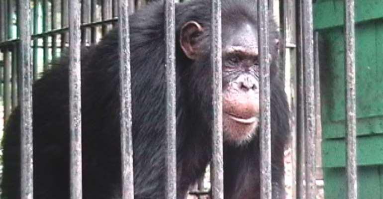 New Accra zoo requires 44 billion cedis--Minister