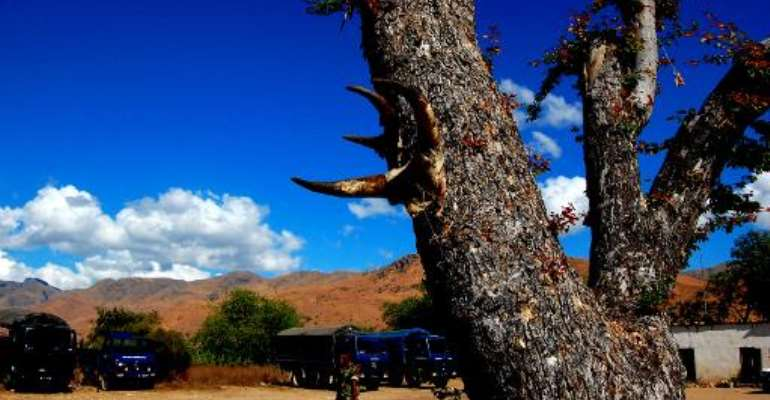This picture taken in Esira, southeastern Madagascar, on June 27, 2012 shows zebu horns hung on a tree to bless a military camp.  By Bilal Tarabey (AFP/File)
