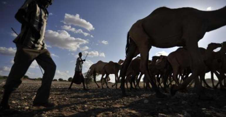 Herders and their camels at a water point near Wajir on March 25, 2014.  By Riccardo Gangale (ILRI/AFP)