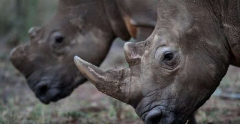 More than 200 rhinos have been poached in South Africa this year.  By Alexander Joe (AFP/File)