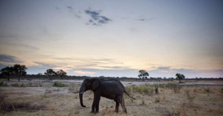 An African elephant is pictured on November 19, 2012, in Hwange National Park in Zimbabwe.  By Martin Bureau (AFP)